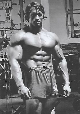 153257 Arnold Schwarzenegger-Bodybuilder Mr Olym Wall Poster Print UK