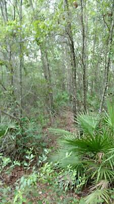 Hunting Property Sanderson Florida Baker County