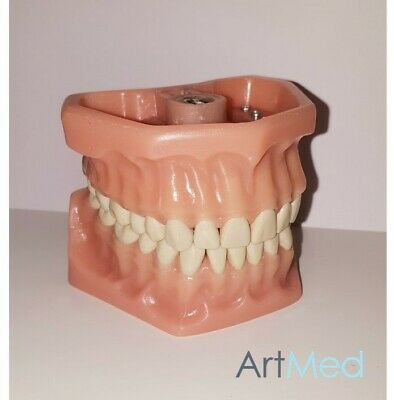 Dental Typodont | Model A3 | Removable Teeth | ARTMED