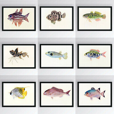 Cartoon Sea Fish Birds Canvas Poster Art Painting Baby Kids Modern Wall Decor
