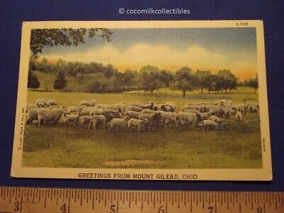 Postcard 1947 Greetings From Mount Gilead Ohio Color Linen Curteich Sheep Used