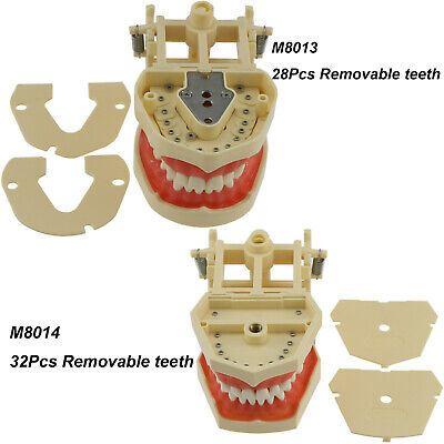 Frasaco AG3 Fit Dental Restorative Typodont Teeth Model 28 32Pcs Removable Teeth