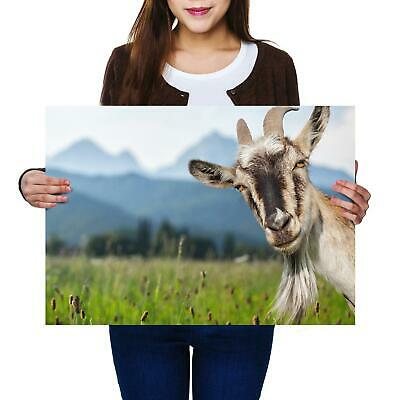A2   Cheeky Billy Goat Mountain Sheep Size A2 Poster Print Photo Art Gift #8515