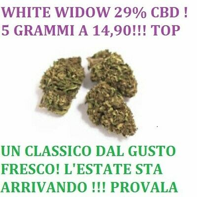 White widow 5g cannabis erba legale light  29% canapa SUPER PROMO BIO!!!!