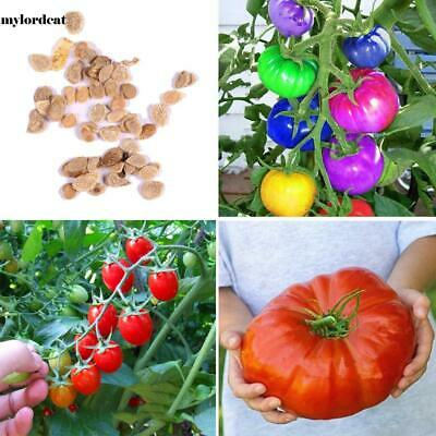 20Pcs Garden Balcony Beautiful Vegetable Plants Multi-color Tomato Seeds M0DC