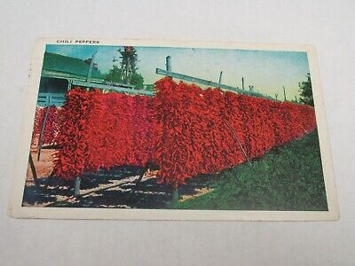 H597 postcard Chili Peppers Farm 1939 out to dry