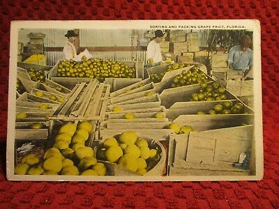 1920'S. Sorting And Packing Grape Fruit. Florida. Postcard G3