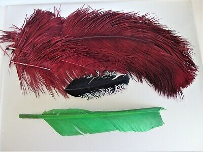 Vintage Millinery Feather Assortment for Crafting