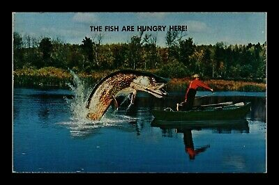 Us Postcard Humor Greeting Giant Hungry Fish Leaping At Fisherman