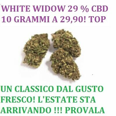 "Cannabis light erba legale canapa ""White Widow 29%""   ‼️ 10 grammi top 🤙"