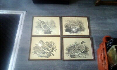Set Of 4 Old / Antique  Bird Prints Pictures In Frame