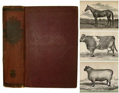 1892 Victorian Farm Guide Antique Cookbook Medical Horse Cow Poultry Bees RARE