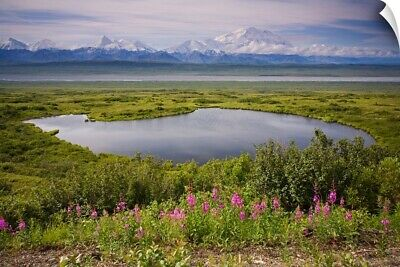"""A kettle pond in summer tundra Mt. McKinley in the background, Denali Nation"