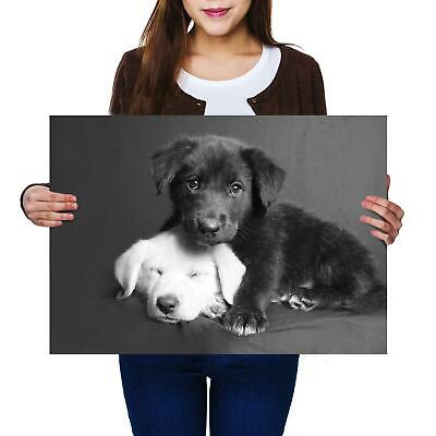 3641 Photo Poster Print Art * All Sizes Animal Poster YELLOW LABRADOR PUPPY