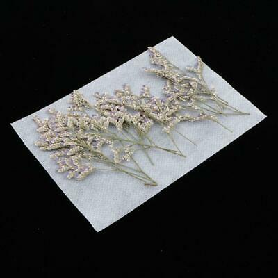 Pack 12pcs Pressed Natural Dried Flowers Real Leaves for DIY Crafts Material