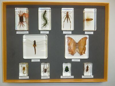 10 Insect Collection Set Beetle & Butterfly & Spider & Scorpion Grasshopper Moth