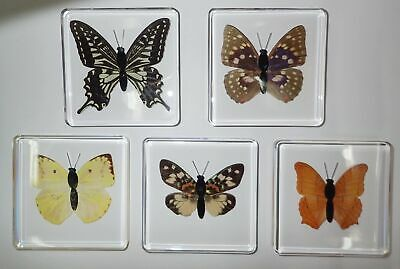 5 Butterfly & Moth Specimen Box Set in Clear Square Block Education Kit SS82A