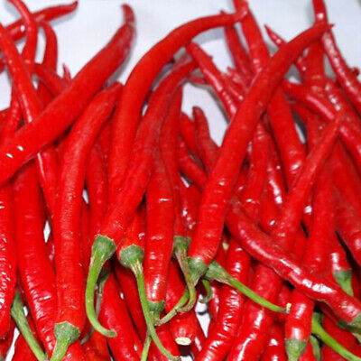 Super Giant Long Chili Seed Red Pepper Organic Seed Planting Eatable 1//2//5//10bag