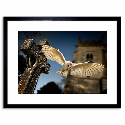 Photo Barn Owl Bird Alba Graveyard Scotland Framed Print 9x7 Inch