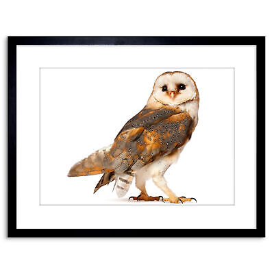 Photo Barn Owl Alba Bird Pray Framed Print 9x7 Inch
