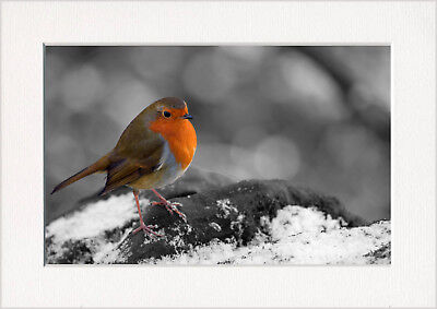 Robin Red Breast Christmas Winter Snow UK Large Canvas Wall Art Picture Print A0