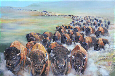 Buffalo Stampede - Limited Edition Print of running Buffalo or Bison in S.Dakota
