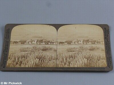 Antique Stereograph Military Related Cards Port Arthur Russian Japan War