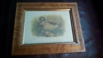 "Pair Antique Birds Eye Maple Frames Bird Lithographs Gilt Liner  10"" x 12"" 1870"