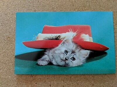 Cat Vintage Postcard. Kitten. Red felt hat. Feathers. Chrome. Not Mailed.