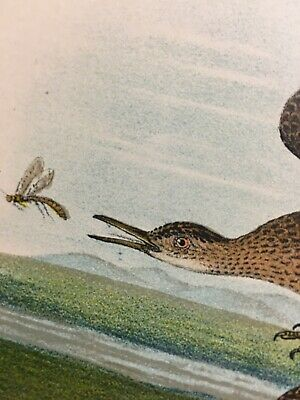 1890 Antique Print Bartramian Sandpiper Birds Flower Insect Snail Nature Color