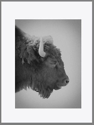 YELLOWSTONE LANDSCAPE POSTER PRINT 24x36 HI RES 9 MIL PAPER