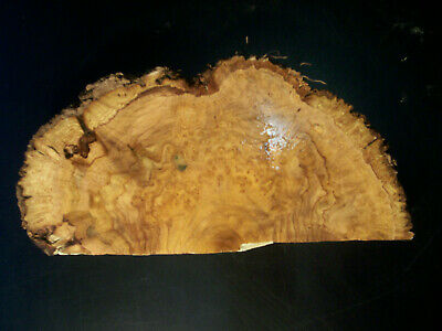 TASMANIAN MUSK BURL Craft Slice
