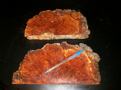 2 x TASMANIAN MYRTLE BURL Craft Slices
