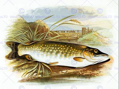 PAINTING ANIMAL FISH NORTHERN PIKE LYDON 12x16'' ART PRINT POSTER LAH616
