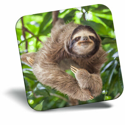 Awesome Fridge Magnet Lazy Sloth Follow Your Dreams Cool Gift #13267