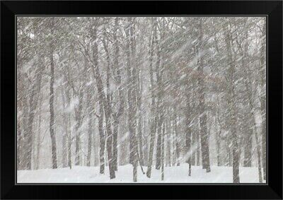 Large snowflakes of first snow falling in deciduous forest Black Framed Art Prin