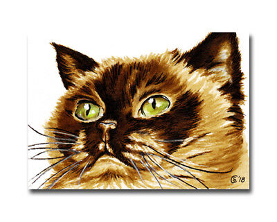 CAT 34 British Shorthair cat kitten painting Sandrine Curtiss ORIGINAL Art ACEO