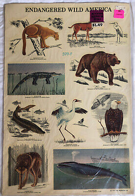 Vintage 70s Meyercord Glass Door Decals 599-F ENDANGERED WILD LIFE AMERICA 1977