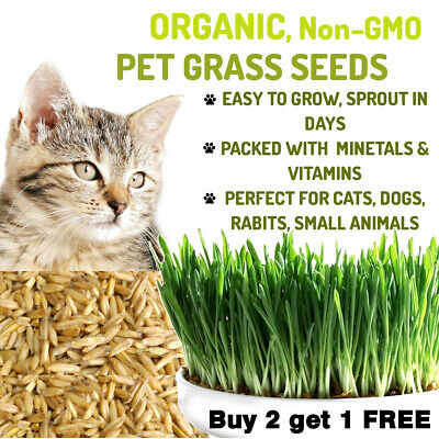 100% Natural Organic Sweet Oat Grass Seeds Cat Rabbit Pet Fresh Seeds UK