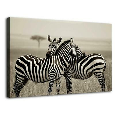 """12""""x20""""Zebra Poster HD Canvas prints Painting Home Decor Picture Room Wall art"""