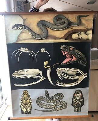 Vintage Large Snake school chart wall chart poster Mid Century Retro Anatomical