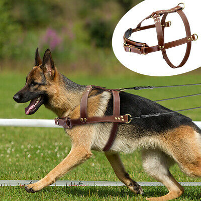 Strong Dog Harness for Weight Pulling & Training Genuine Leather Harness Pitbull