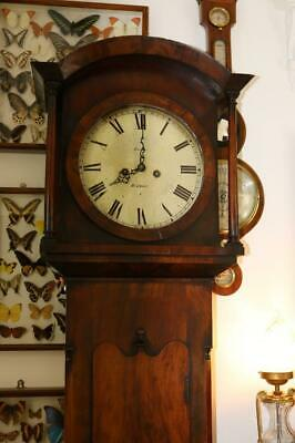 WEST COUNTRY ANTIQUE GRANDFATHER LONGCASE CLOCK flame mahogany 8 DAY working