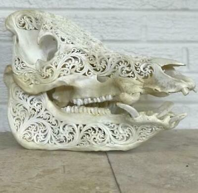 Intricately Carved Wild Boar Skulls with Mandala