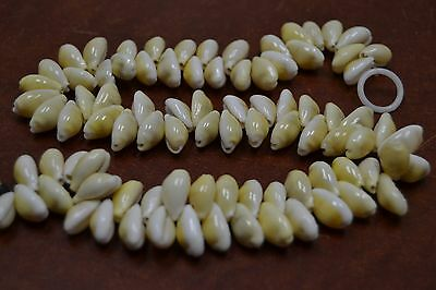 PCS DRILLED HOLE BROWNISH RING TOP COWRIE COWRY SEA SHELL BEADS 2 LBS #7656 400