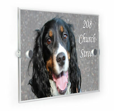 Dog Breed WP/_PET/_022 A house is not a home without an English Springer Spaniel