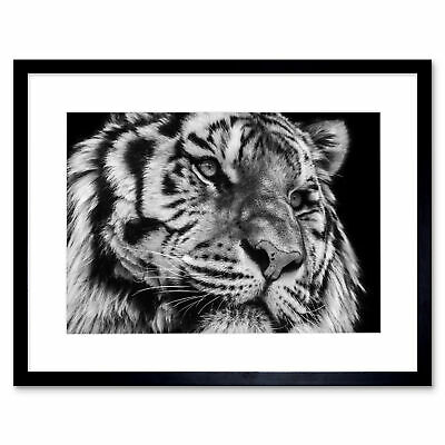 Into The Dark By Marina Cano Tiger Black And White Photos Poster 12x36 Inch