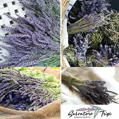 50 Dried Natural LAVENDER Stems French Provence Bunch Fragrant Tied UK Scent A1