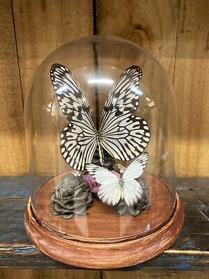 Wood Nymph Butterfly Dome