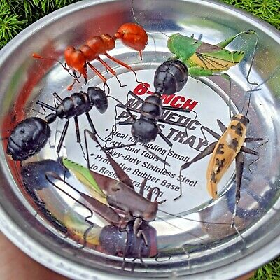 Antique Folk Art Paper Wood Metal Painted Grasshopper Ant Bug Insect Figurines